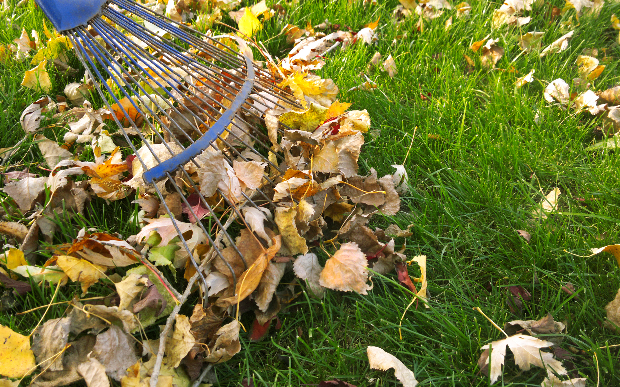 Yard Cleanup | S&E Wards Landscape Management