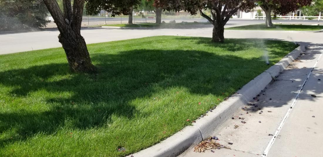 Lawn, Tree and Shrub Fertilizing