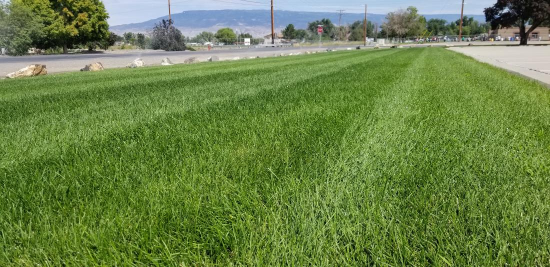 Scecial Mowing for Occations or Keeping Lot Weed down