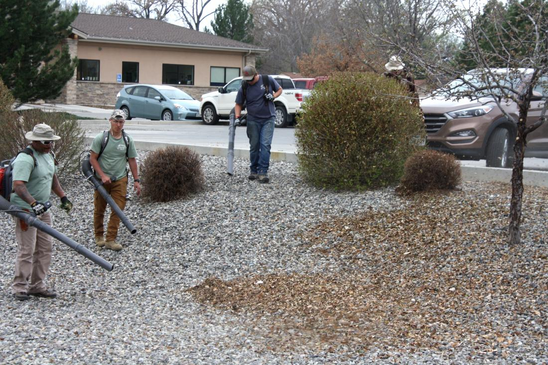 Full-Service General Yard Clean Up