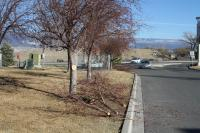 Picture of pruning Trees at Safeway 1500 Hwy 92 - Delta Colorado 81416