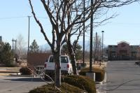 Picture of pruning more trees at Safeway 1500 Hwy 92 - Delta Colorado 81416